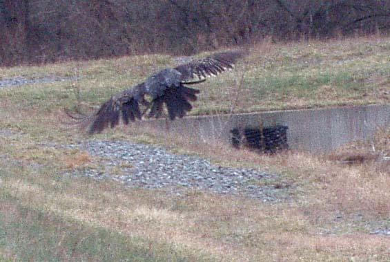 VulturesRiverdale2