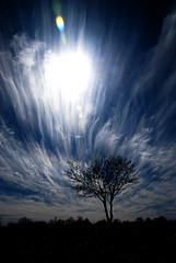 Blue, Clouds, Tree (MattGerlachPhotography) Tags: blue sky sun tree beautiful beauty clouds one alone forsale streak fineart smooth picture single lone strings sell mattgerlachphotography