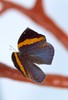 """Butterfly detail2 • <a style=""""font-size:0.8em;"""" href=""""http://www.flickr.com/photos/35757785@N07/3373950723/"""" target=""""_blank"""">View on Flickr</a>"""