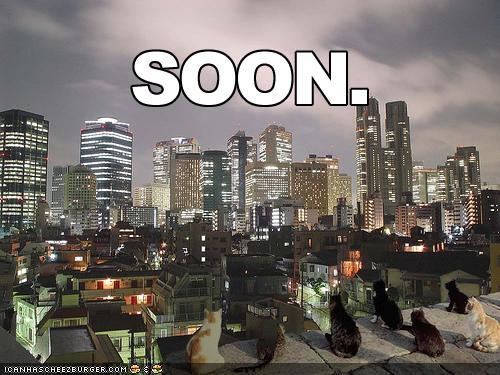 funny-pictures-soon-cats-city-skyli