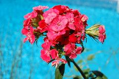 spring is here! (kelly-bell) Tags: blue red flower color nature mississippi flora colorful turquoise ms bloom rgb southernlife