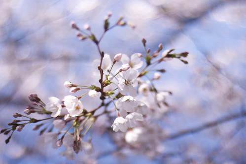 13346 :  : Sakura2009 #15