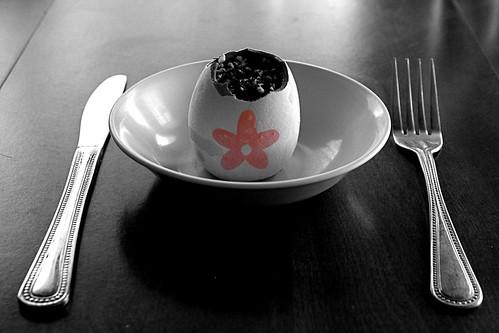The Eggsperimet - Day 7