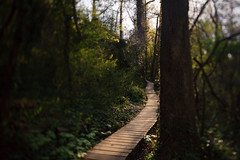 . (Ansel Olson) Tags: park wood trees green forest virginia woods ramp running run brush richmond va xc mountainbiking wetland jamesriver singletrack tiltshift richmondcity buttermilktrail irunhere
