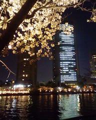 大川端の夜桜