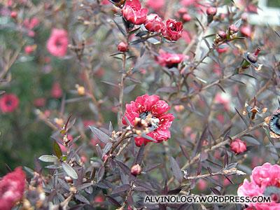 Petit red flowers