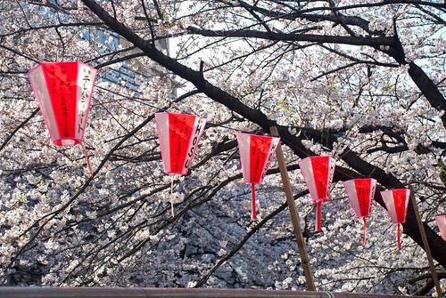 Sakura in Naka Meguro 09
