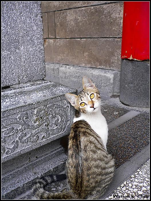 20090414-龍山寺貓貓-10.jpg