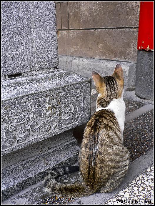 20090414-龍山寺貓貓-11.jpg