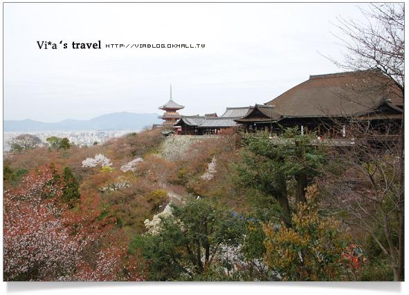 【京都春櫻旅】京都旅遊景點必訪~京都清水寺之美京都清水寺37