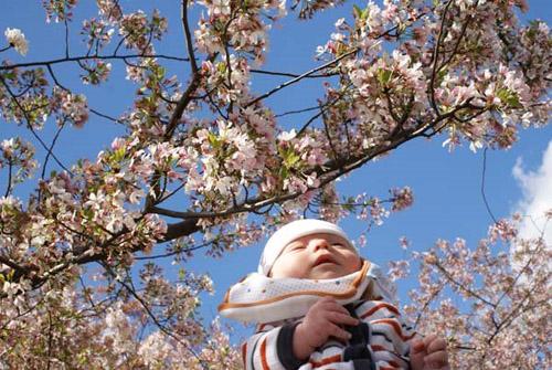 oscar+blossoms