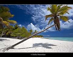 Saona Island - 1 (DolliaSH) Tags: dominicanrepublic dominicaanserepubliek saonaisland islasaona tropicalisland 50d canon cs4 dollia dollias eos sheombar wideangle ultrawide eos50d 2009 landscape beach sea bountyisland bountyeiland ocean repblicadominicana wimpy vacation holiday place destination location journey tour touring tourism tourist travel traveling visit visiting caribbean caribe water sky sun warm sand summer fun white 1022 palm trees turquoise blue paradise coconut tropical colour color colors photo photography photos tree diving snorkeling postcard light lights hot catamaran speedboat 1022mm topf50 topf100 mar