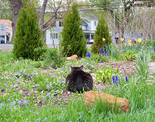 Fuzzy in Garden 3