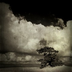 tree of clouds (biancavanderwerf) Tags: tree dutch clouds square landscape mono textures bianca dreamcatcher memoriesbook theturntable graphicmaster
