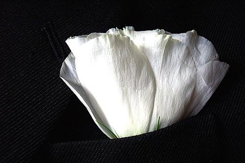 Cravo branco na lapela - (Dianthus caryophyllus)