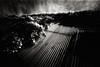 À la verticale de l'été :V (TommyOshima) Tags: leica blackandwhite film monochrome ir voigtlander f45 infrared rodinal 15mm 125 m7 superwideheliarii àlaverticaledelété