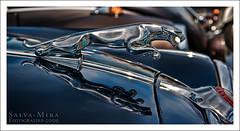Jaguar (Salva Mira) Tags: 20d classic car canon eos classiccar canon20d wideangle canoneos20d coche l jaguar oldcar angular f28 2470l eos20d granangular salva clsico pasvalenci lseries cotxe 2470mm 2470 canon2470l cocheclsico nohdr clssic seriel cotxeclssic salvamira eixidetes eixidetespelpasvalenci salvadormira