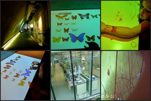 Darwin Centre #04