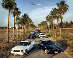 So many horses the wild and free .. The Mustang (alsultanarts) Tags: trees horse white black tree cars car canon palms rebel sigma palm mohammed kuwait mustang 1020 xsi q8 stang 450d alsultan blendingimages mralsultan