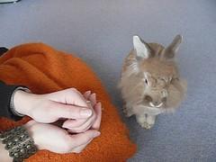 Hoppel-TV, Folge 15: Ftterung - Feeding-time (Gret B.) Tags: cute rabbit video essen leo lea kaninchen hasen fttern ftterung