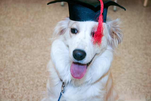 Cidney PetSmart Beginner Education Graduation