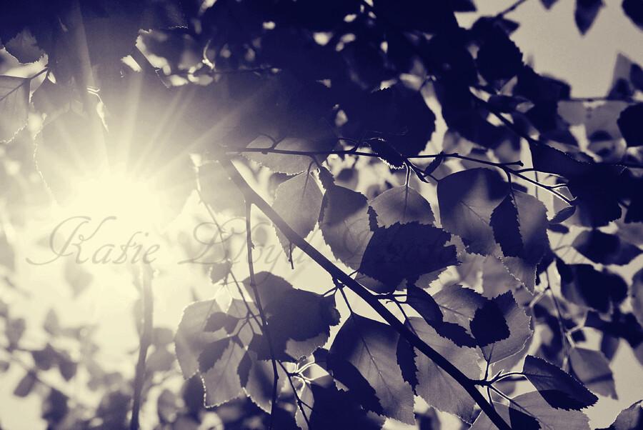 light-thru-leaves-2