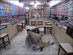 Incredible India... (Christian Lagat) Tags: india man shop bull boutique varanasi shiva hindu grdigital seller homme aum inde autel taureau uttarpradesh  vendeur incredibleindia ricohgrd bnars petiteshistoiressansparoles