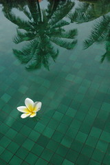 Flower in pool