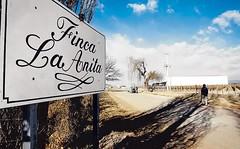 Degustación de vinos de Finca La Anita
