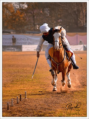 Tent Pegging (IshtiaQ Ahmed (is Back)) Tags: pakistan horses history race culture target punjab rawalpindi tentpegging ishtiaq