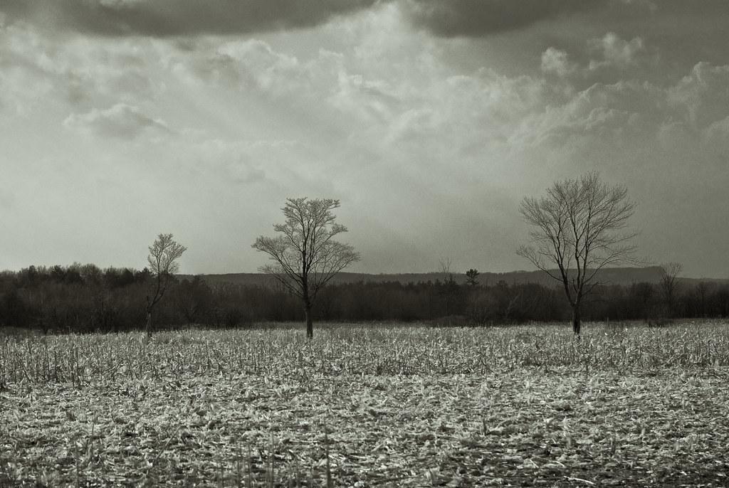 Trees-0270.jpg
