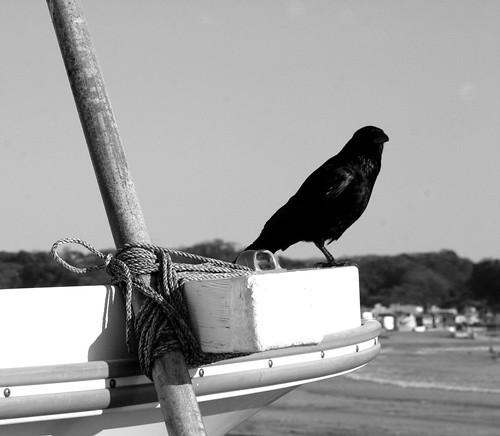 buda cuervo