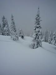 P1000189 (m_dowhaniuk) Tags: snow snowboarding redfish