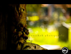 Nothing shines like sunshine (ayashok photography) Tags: color cemetery nikon dof bangalore nikonstunninggallery nikond40 ayashok nikor55200mm aadugodi