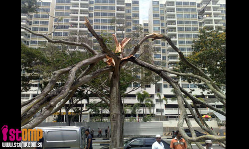 Tree falls on bikes near Tampines interchange