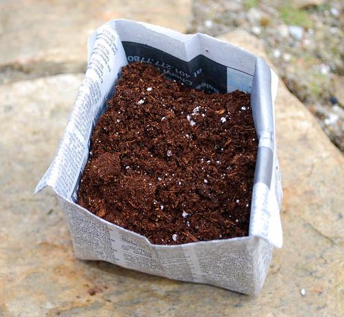Paper Pot