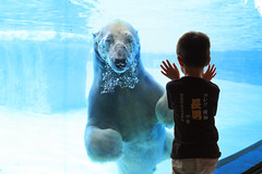 polar bear encounter (Kenny Teo (zoompict)) Tags: bridge sky seascape reflection water sunrise canon landscape boat reservoir lower kenny seletar yishun platinumphoto eos1000d zoompict singaporelowerpiercereservoir
