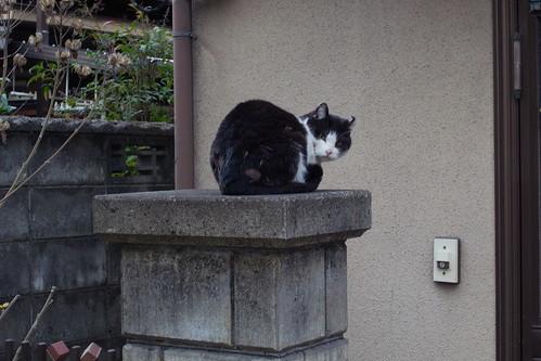 Today's Cat@20090321
