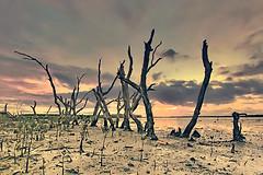 Life's Epic Battle (tropicaLiving - Jessy Eykendorp) Tags: sunset bali indonesia utata serangan efs1022mmf3545usm utatafeature canoneos50d tropicaliving jessyce lifesepicbattle