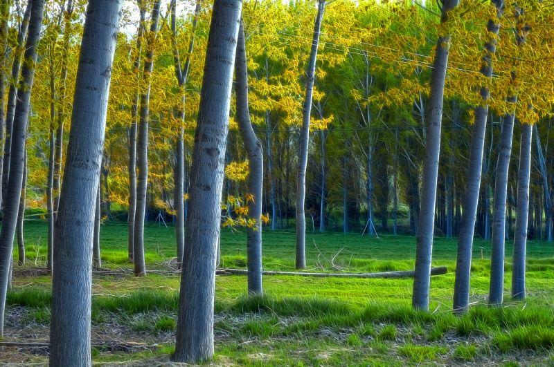 Las dehesas de Letur (Albacete, Spain)