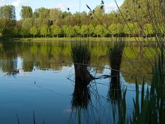 Landscape (DutchImage) Tags: park ps almere panasonicdmcfz8