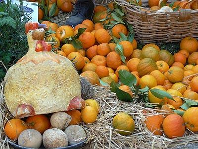 poule et oranges.jpg