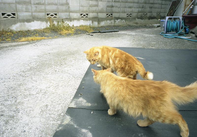 しまなみ海道の猫