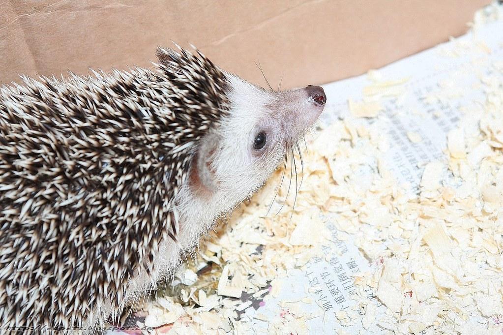034_2009-04-26_Hedgehog
