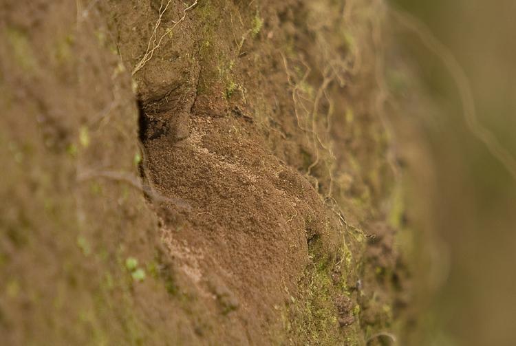 Sand Martin Hole