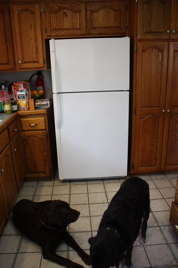 The old refrigerator
