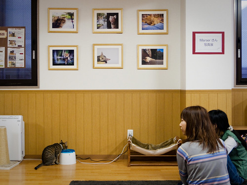 petit exhibition at the cat cafe (at