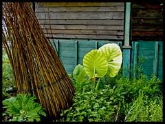 Urban Jungle - Quai Ceineray , jardins sur l'erdre (chilirv) Tags: urbanjungle manaus nantes guinguette erdre pierreorefice chilirv1 quaiceineray
