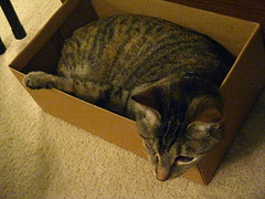 Maggie in the shoebox (1)