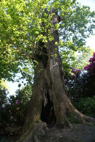 powis_castle-broken_tree